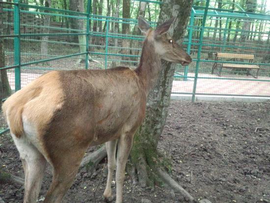 Stavropol Zoo