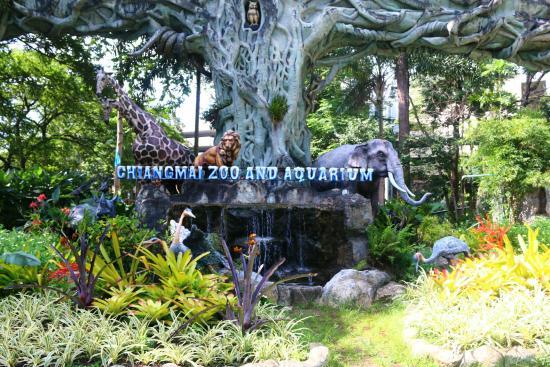 Chiang Mai Zoo - Picture of Chiang Mai Zoo, Chiang Mai - TripAdvisor