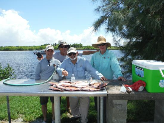 Mangrove snapper foto di tampa flats and bay fishing for Fishing charters tampa