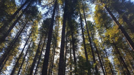 gifford pinchot national forest  washington  united states   top tips before you go