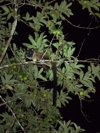 Civet cat at Osman's Homestay