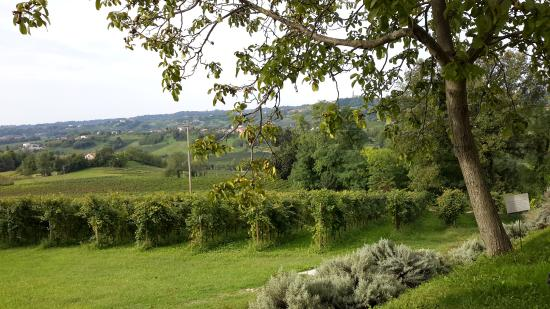 Alice Relais nelle Vigne: Vineyard view from the terrace