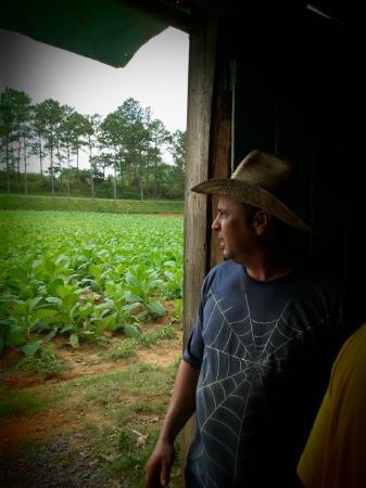 Valle de Vinales: Tobaksplantagens ägare
