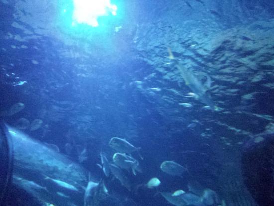 Sea Life Acquario - Picture of Gardaland SEA LIFE Aquarium ...