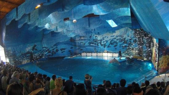 Dolphin Show Picture Of Barcelona Zoo Barcelona Tripadvisor