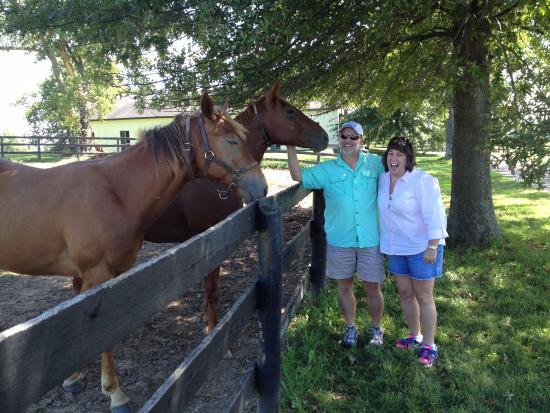 UnBridled Horse Tours: Horse Farm