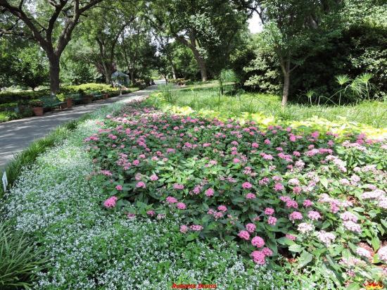 Giardino foto di giardini botanici di dallas dallas - Giardini fantastici ...
