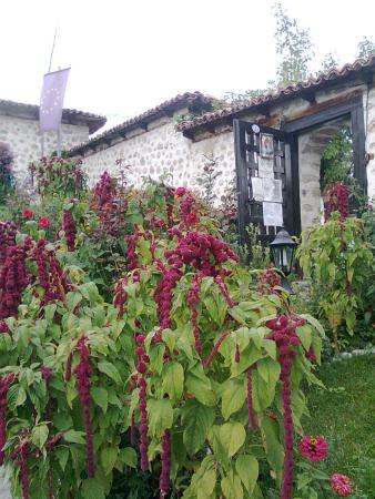 Dobarsko, Bulgaria: Beautiful plants in the garden