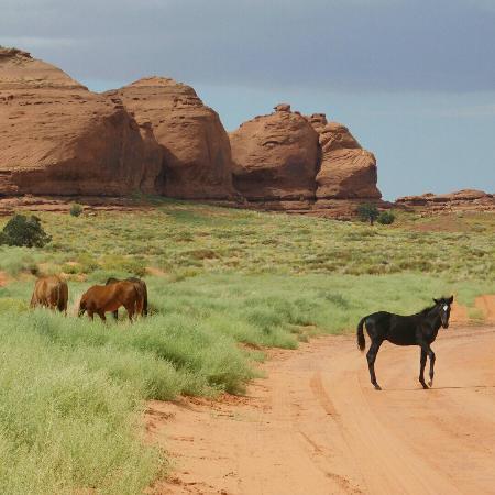 Navajo Spirit Tours All Day