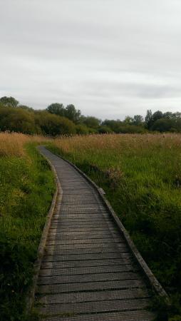 Winnall Moors Nature Reserve Photo