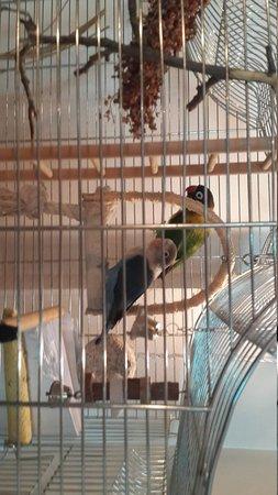 Boulangerie: Очаровательные попугаи на первом этаже