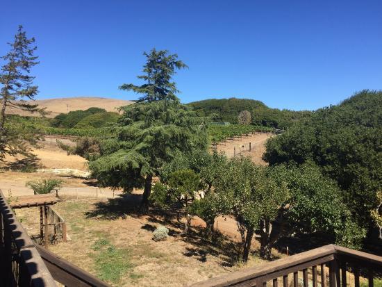 Point Reyes Vineyard Inn: The vineyard.