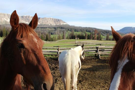 Brooks Lake Lodge and Spa: Horses at Brooks Lake Lodge