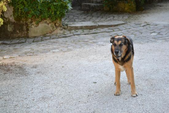 Chateau de Nazelles Amboise: We love Sammy!