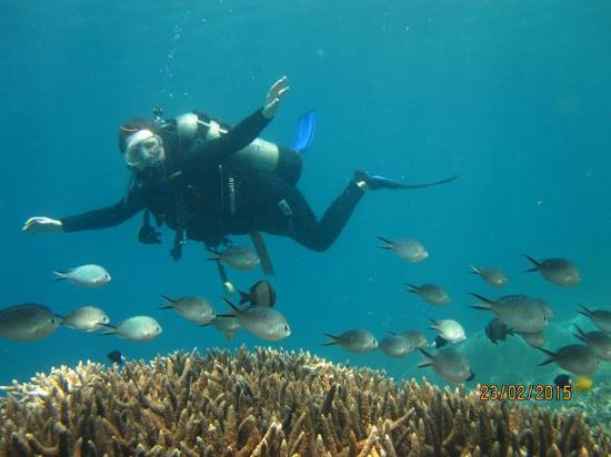 芽庄海星潜水中心