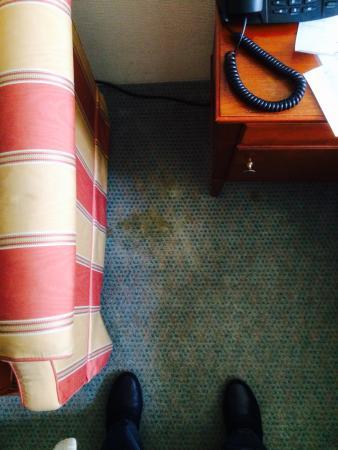 Hotel Zum Roten Bären: Teppichboden verfleckt