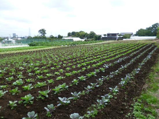 Eco Farm Takahashi