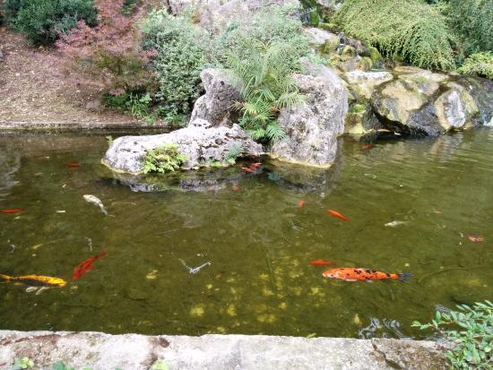 japanese garden picture of orto botanico di roma rome