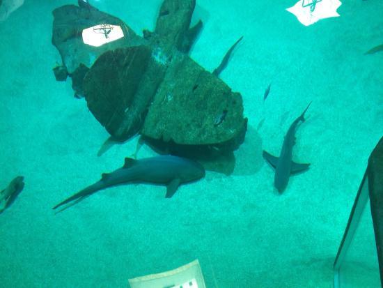 photo2.jpg - Picture of Seaquarium, Le Grau-du-Roi - TripAdvisor