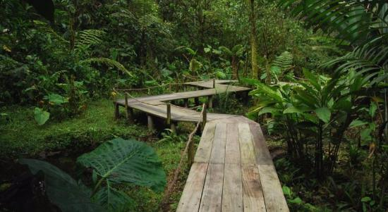 Mindo Garden: passeio na selva