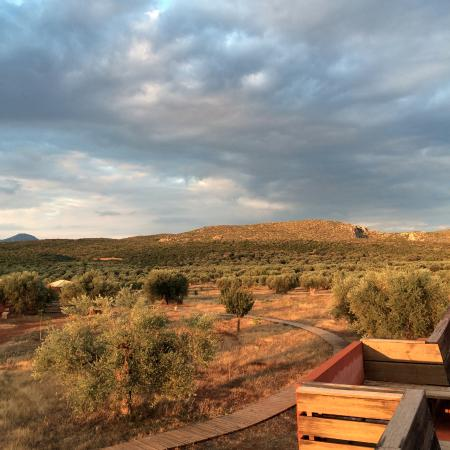 Eumelia Organic Agrotourism Farm & Guesthouse: View from the rooftop