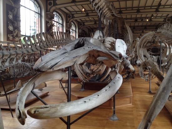 Natural History Museum Paris Hours