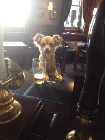 Gargrave, UK: Meet 'Maxamillion' the thirdthe new pub Guard dog!
