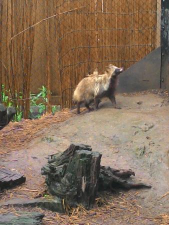 白熊くん - Picture of Asahiyama Zoo, Asahikawa - TripAdvisor