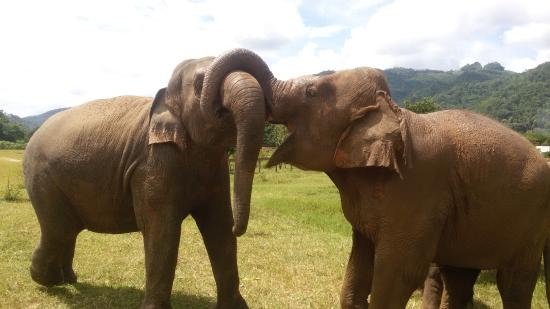 Elephant Nature Park: Saying hello each other, you can see them happy