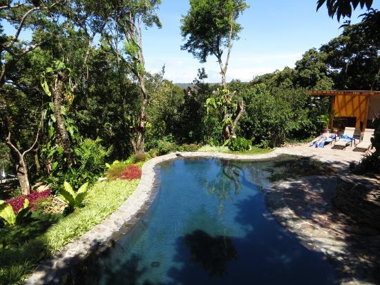 Monteverde Lodge U0026 Gardens: Outdoor Pool Nice Design