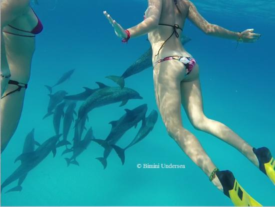 Bimini: Wild Dolphin Expedition