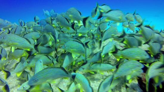bahía de Simpson, St. Maarten: .