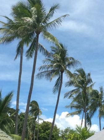 Idyllic Samui Oceanfront Resort & Villas: vue allongé sur nos transats