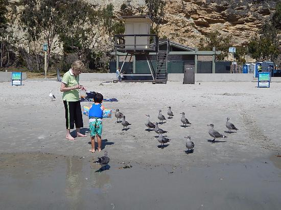 Dana Point, Kaliforniya: You're not supposed to feed the seaguls
