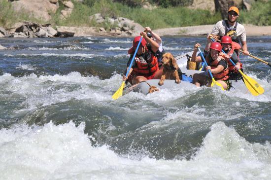 Dvorak Raft Kayak & Fishing Expeditions: America's #1 Arkansas River Rafting