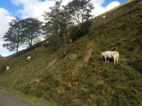 Arette, Francia: Les différents paysages