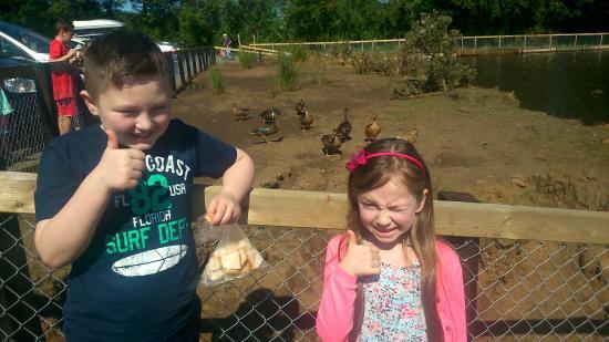 Rosepark Farm: Fun day out