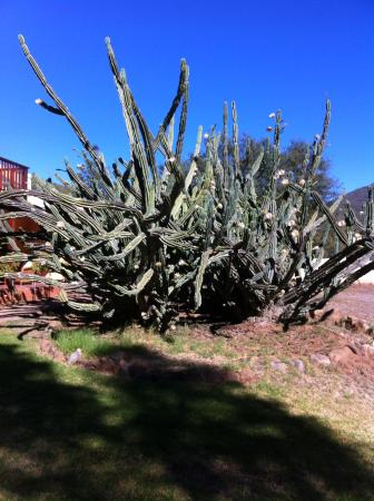 Montana Guest Farm: Mehr als 200 Jahre alter Cactus