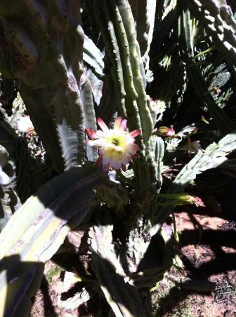 Montana Guest Farm: Cactus