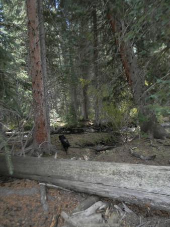 Clark, CO: Nearby Woods