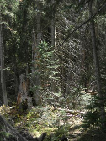 Clark, CO: Nearby Trees