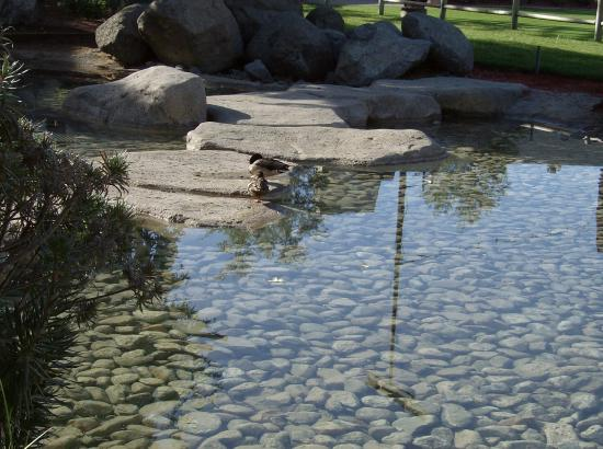 Viejas Outlet Center: Duck hanging out in one of the pools