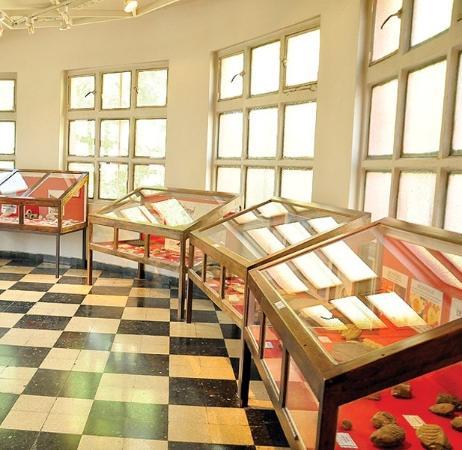 Fundacion Museo Regional Patagonico Profesor Antonio Garces