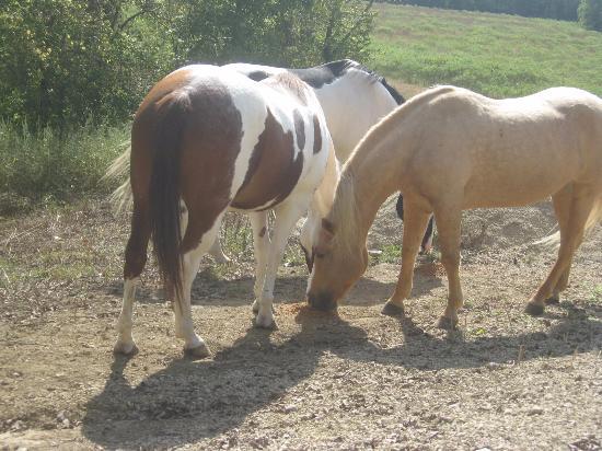 Rising Sun, Индиана: Horses
