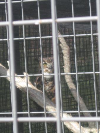 Rising Sun, Индиана: Owl