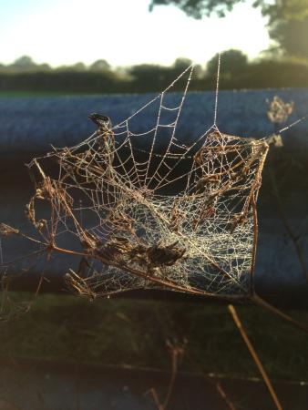 Early Morning spiderweb near the river Lune, Melling