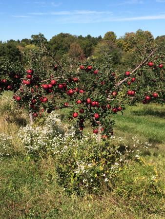 Greig Farm: Lovely place and everyone was super friendly and nice. The best apples I've ever had.