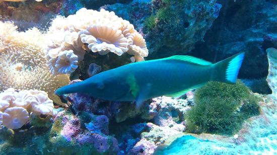 ... - Picture of Underwater World Langkawi, Langkawi - TripAdvisor