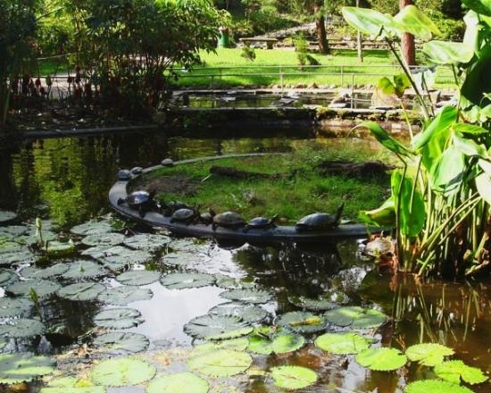 Uno de los estanques picture of jardin botanico la for Los estanques