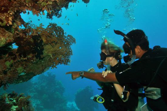 Picture of reef oasis - Reef oasis dive club ...